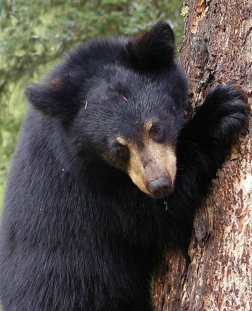 bear-cub-53601_640